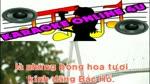 Karaoke_HOA_THOM_DANG_BAC.flv