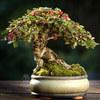 Chiem_nguong_mau_bonsai_dep_nhat_the_gioi.jpg