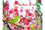 Mua_Xuan_Nho_Nho1.swf