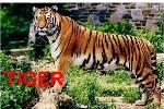 TIGER.swf