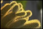 Cactus_14.jpg