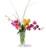 Tulip_va_lan.jpg
